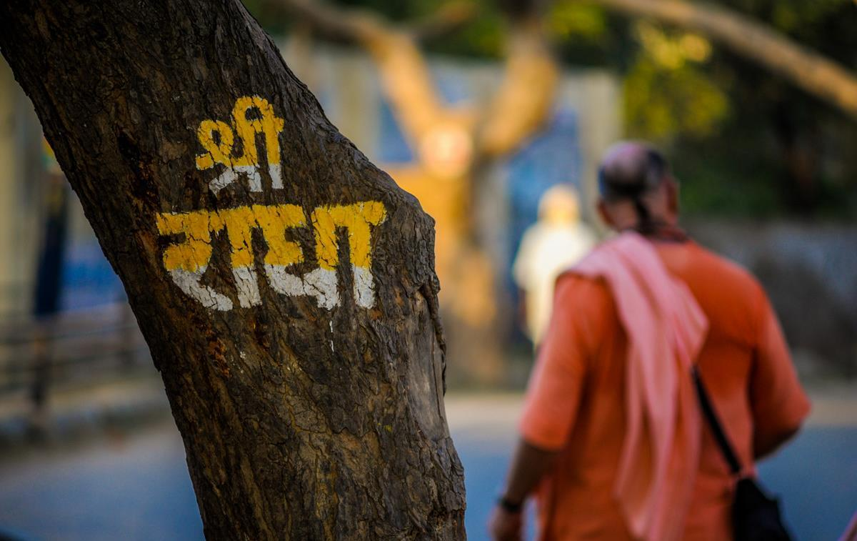 trees of Vrindavan